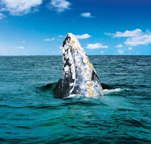 Baja yacht charter, California